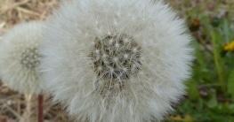 raumluftreiniger-gegen-pollenallergie
