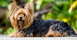 Raumluftreiniger gegen Hundeallergie