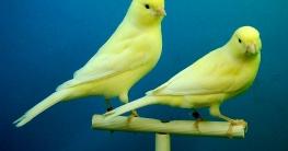 Raumluftreiniger gegen Vogelallergie
